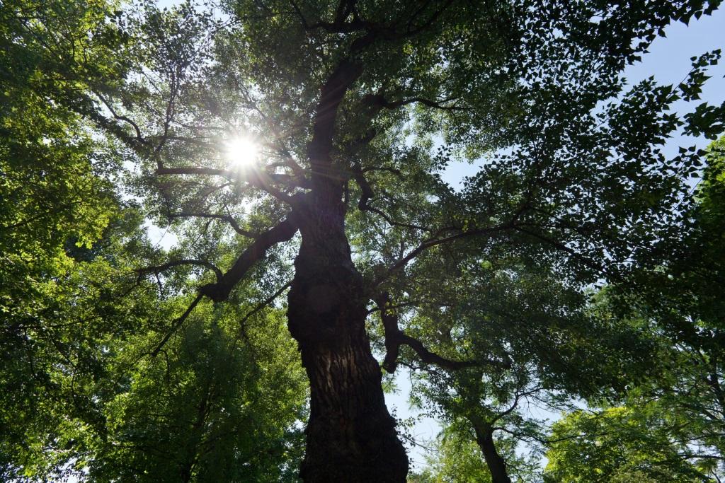 Baum für ein Holzhaus